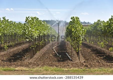 Plant agriculture and nursery near Sandy Oregon. - stock photo