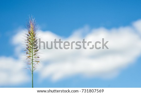 plant and beautiful blue sky with clouds, macro photography.
