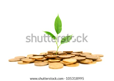 Plant and gold coins. On a white background. - stock photo