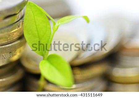 Plant and lot of coins isolated on white background - stock photo