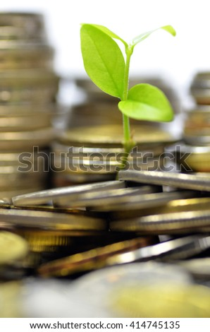 Plant and lot of coins isolated on white background. Money concept - stock photo