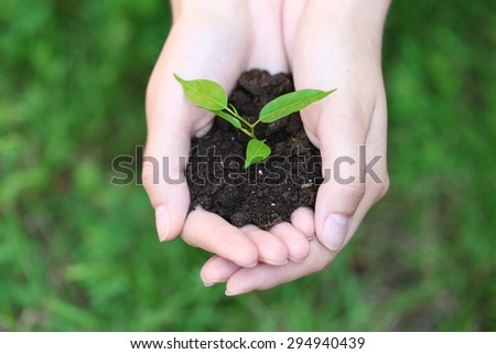 Plant and soil in female hands over green grass, closeup - stock photo