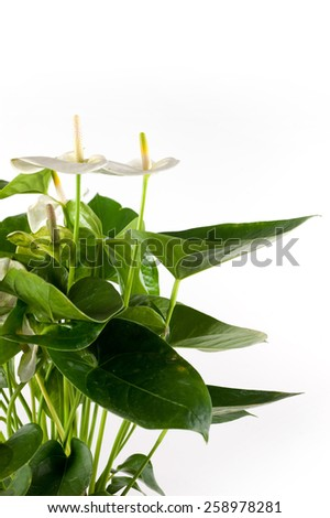 plant and white flower - stock photo
