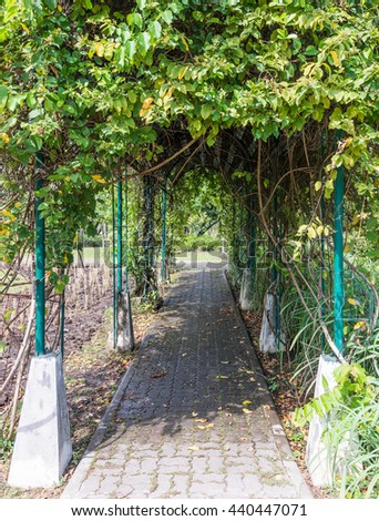Plant arch camber over the brick way in the urban park. - stock photo