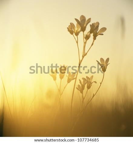 Plant at dusk - stock photo