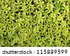 Plant background of green Sphagnum moss - stock photo
