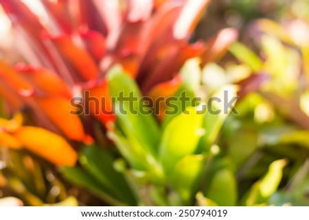 Plant bokeh background or wallpaper from defocused