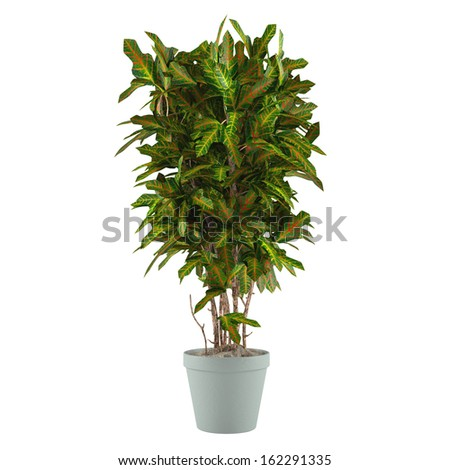 Plant bush in the pot isolated