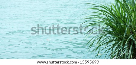 plant by the seaside, water texture background