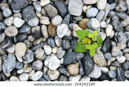 Plant calm pebble stone for background. Meditation scene for healthy life and peace. Close up and macro leaves. Top view. - stock photo