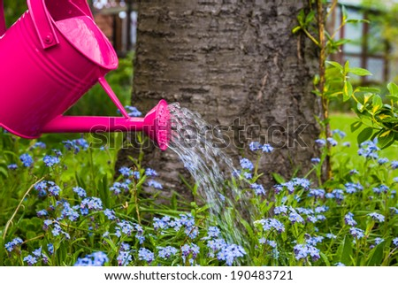 Plant Care: Watering spring flowers in the garden