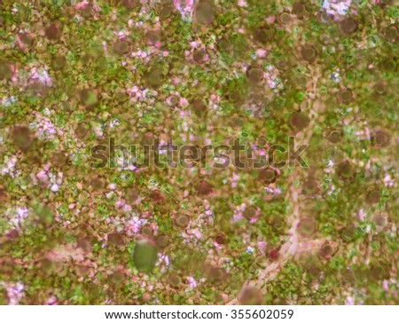 Plant cells background. - stock photo