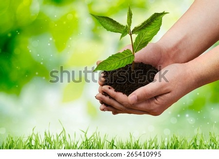 Plant, child, business. - stock photo