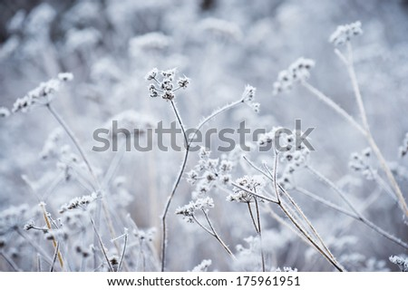 Plant covered with frost, open aperture - stock photo