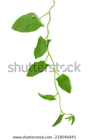 plant creepers on a white background - stock photo