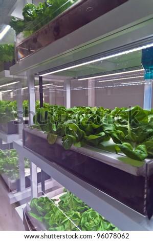 Plant factory - stock photo