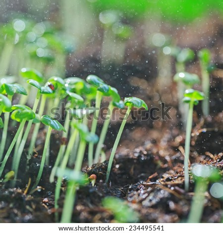 Plant germination in the land