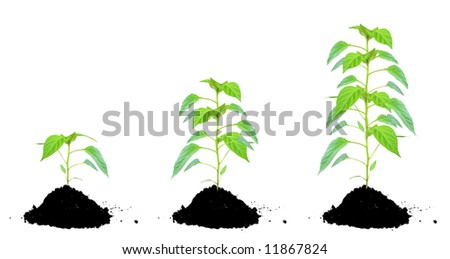 Plant green and soil - stock photo