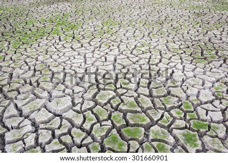 Plant green grass on cracked earth background - stock photo