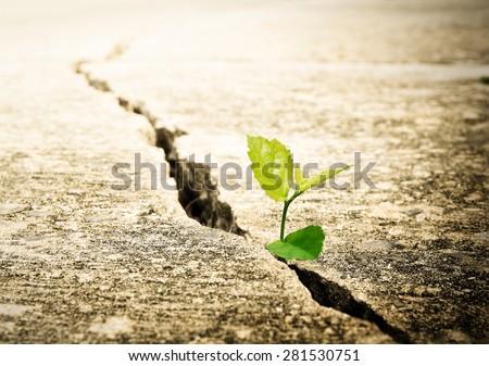 Plant grow on street , Ecology concept - stock photo