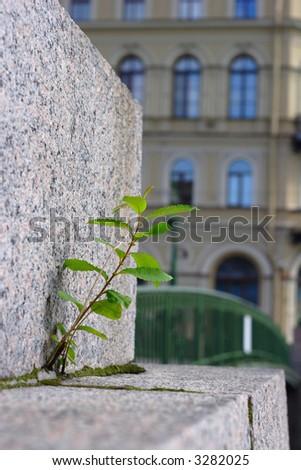 Plant grow up through brick pave on bridge - stock photo