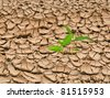 Plant growing from barren land - stock photo