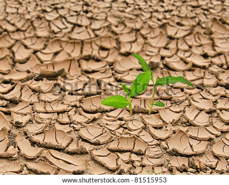 Plant growing from barren land
