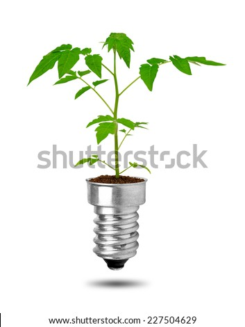 Plant growing from bulb isolated on white background. The concept of clean energy - stock photo