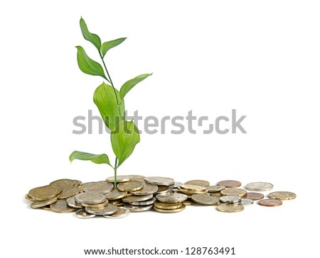 Plant growing from coins - stock photo
