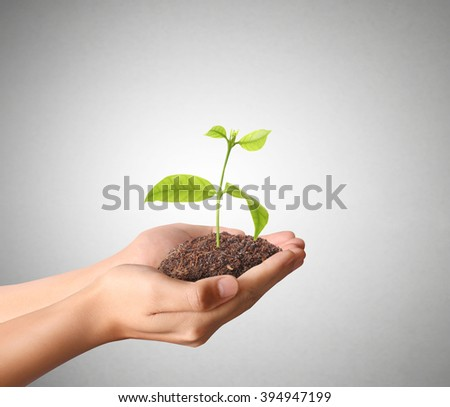 plant growing from in hand  - stock photo