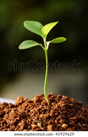 Plant growing from soil - stock photo
