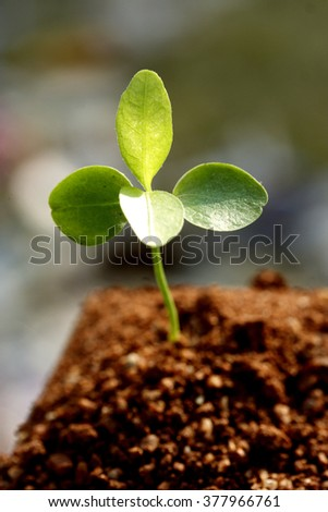 Plant growing from soil -New life - stock photo