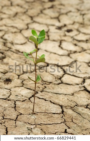 Plant growing in a crack on dry ground - stock photo