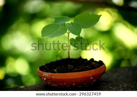 Plant growing in a small pot - stock photo