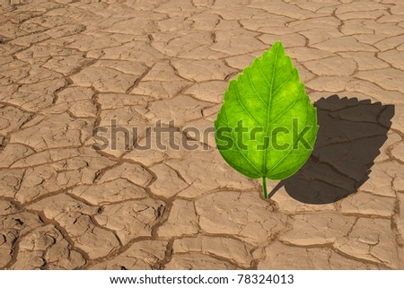 Plant growing in dried cracked desert sand - stock photo