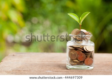 Plant Growing In Savings Coins on wooden - Investment And Interest Concept  - stock photo