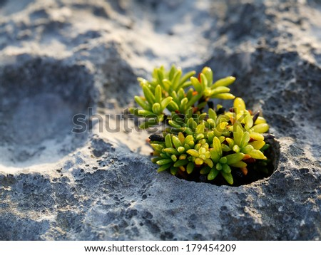 Plant growing on rock