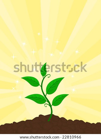 plant growing on sunny morning