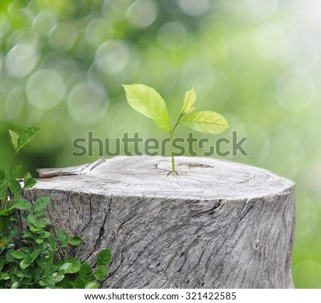 Plant growing on timber on green bokeh background - stock photo