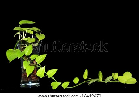 Plant growing out of a vase - stock photo