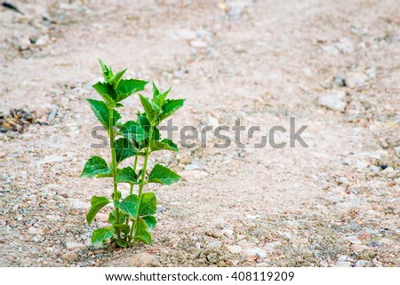 plant growing out of concrete rubble and debris of bricks - stock photo