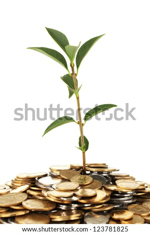 plant growing out of gold and silver  coins on white background close-up