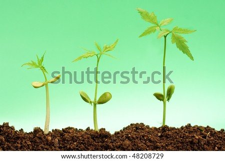 Plant growing stages-Beginnings - stock photo