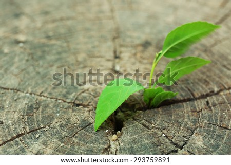 Plant growing through trunk of tree - stock photo