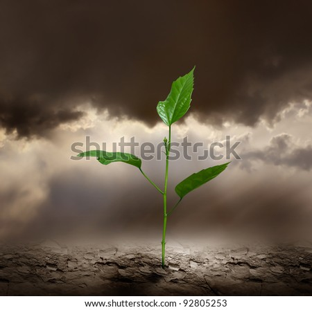Plant growing trough dead ground. - stock photo