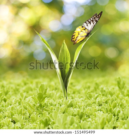 Plant Growing with green grass and butterfly - stock photo
