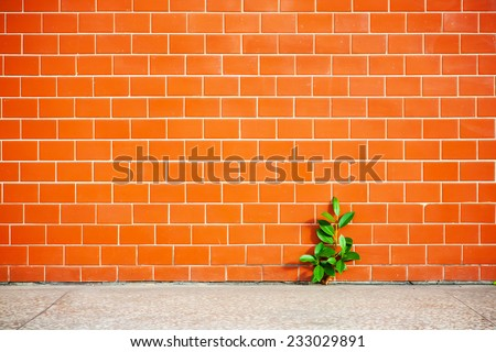 plant grows side by brick wall - stock photo