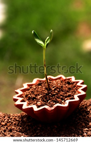 Plant growth - stock photo