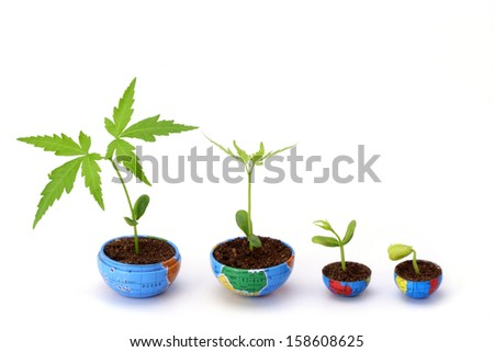 Plant growth- Evaluation - stock photo