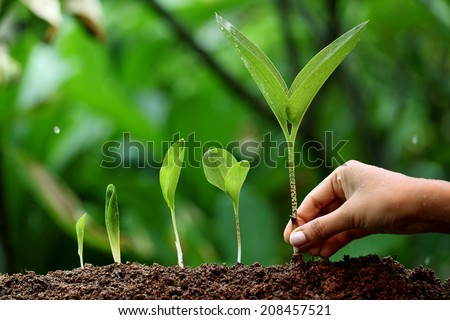 Plant growth-New life - stock photo